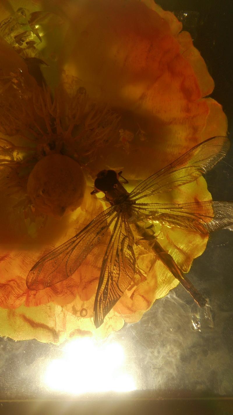 鲜花琥珀 动物琥珀 水晶雕塑 透明雕塑 玻璃雕塑 亚克力雕塑_3.JPG