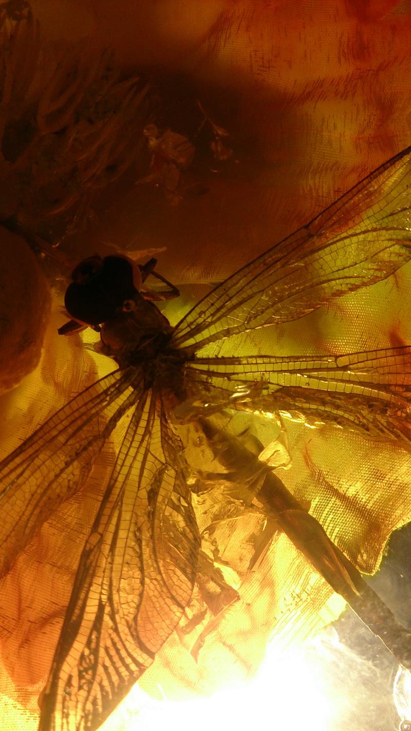 鲜花蜻蜓琥珀研制成功 (技术超越日本)