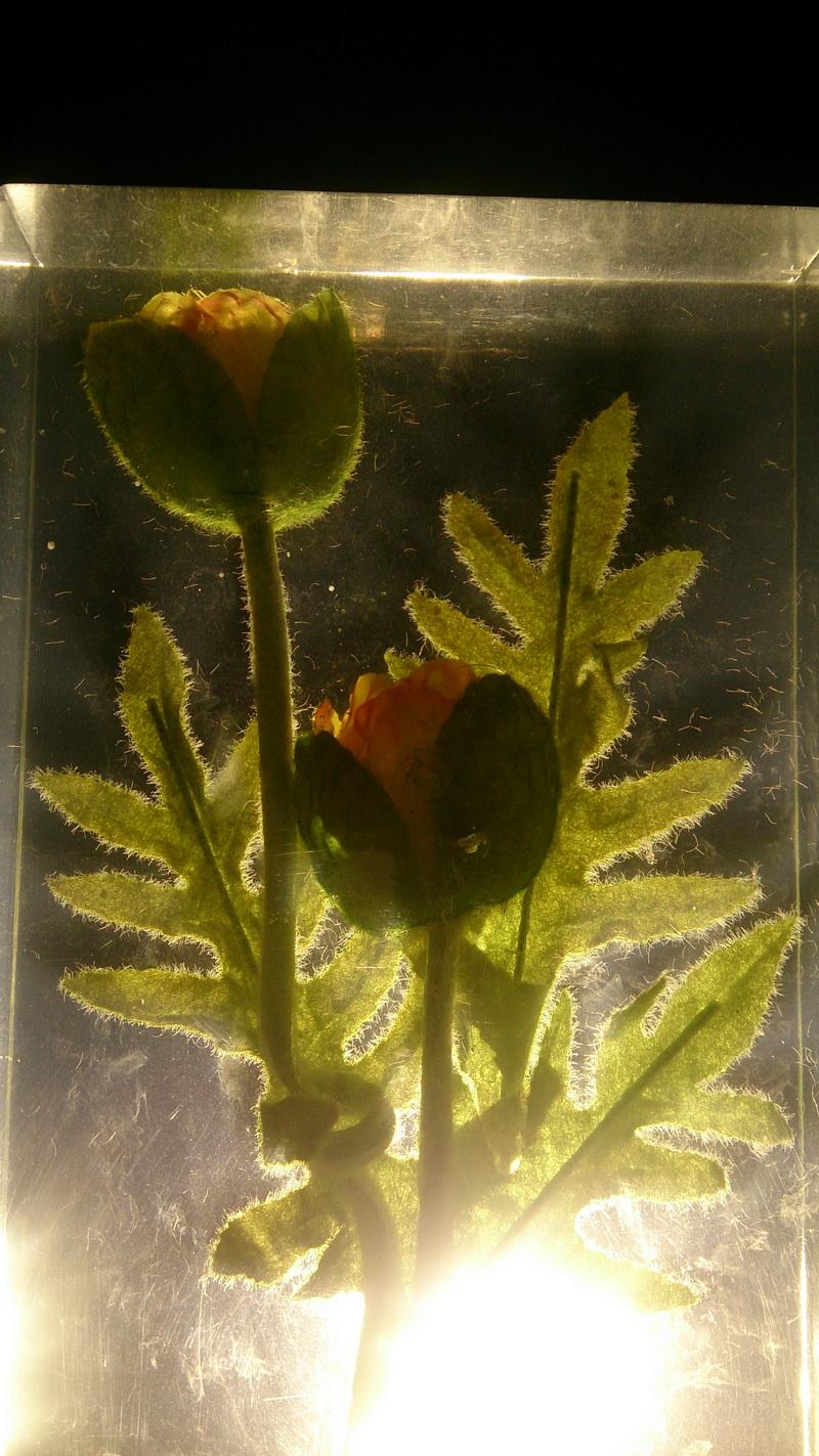 鲜花琥珀 绿叶琥珀 透明雕塑 大型雕塑 水晶雕塑 玻璃雕塑 亚克力雕塑_3.JPG