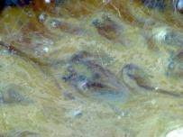 南宋代 吉州窑 窑变 显微图片